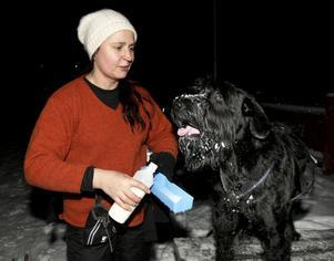 Sara Flodin och riesenschnauzern Chilie har nyligen börjat prova draghundsporten och därefter blivit återkommande besökare på onsdagsträningarna i Grängesberg.
