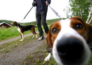 Under tiden 1 mars—20 augusti får inga hundar löpa lösa i skog och mark.