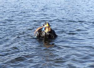 Bo Ulfhielm, marinarkeolog vid Länsmuseet Gävleborg har dykt i vattnen kring Axmar i många år.