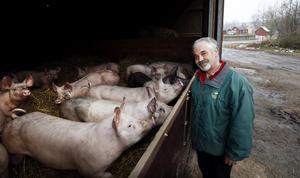 På Norrgården vill de ha en naturlig uppfödningsmodell för grisarna. Något som enligt Per-Henric Pettersson gagnar såväl djur som människor och miljön.