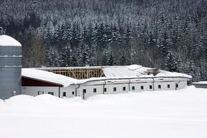 Taket har rasat in på halva svinstallet hos Klas-Erik Andersson. Vikten av snön blev för stor.
