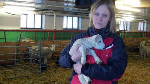 """Slut  för  närproducerat.  """"Tråkigt att slakteriet i Bäsinge köps upp för att läggas ned"""",  säger Karin Olsson, Butik Lundagård med ett et par dagar gammalt lamm i famnen. I och med nedläggningen måste  företaget upphöra med sina närproducerade lammlådor. De som säljs efter beställning direkt till kund."""