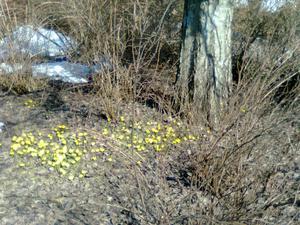 Våren är här ! Foto: Ingela