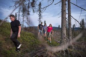 Björnspaningen sker mestadels från bilen, men vid Västanvik stiger vi ut för att på ett björnide som stått tomt i cirka två år.