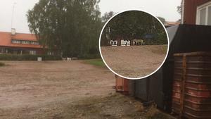 Tvärs över gårdsplanen på Åsby gård kunde Yngve Lorenz och en anställd hur vargen – till synes helt orädd – gick fram och tog en katt tillhörande en av gårdens hyresgäster.