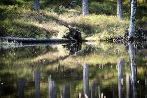 En nyckelbiotop ligger strax intill den lilla sjön.