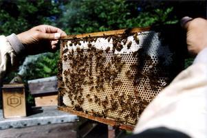 Äkta vara. Honungen ska vara 100 procentig för för att få säljas som honung.