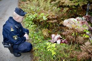 Arkivbild från 2009. Den gången hade resterna från slaktade får blivit dumpade vid Tullgarn.