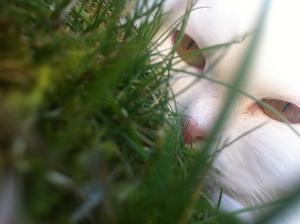 Min dotter tog denna bild i veckan när min katt låg i gräset och smög på alla småkryp runt omkring ..