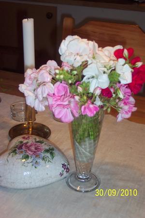 Dags att plocka in pelargonerna och rädda dem undan frosten, passade på och klippa av några vackra blommor.