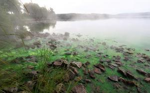 Grönt fjärrvärmevatten läckte ut i Ljustern i går. Foto: Christofer Cederberg