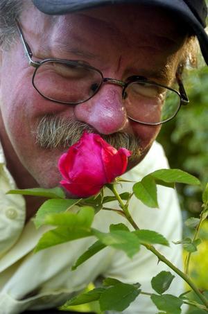 Amerikarosen. Morden fireglow är namnet på den här gracila klarröda skönheten, som Bosse Kristenson fått som gåva från en familj i USA. Plantan kom till Mariehöjd i april år 2000 efter sex dygns resa i en plastpåse och gör Bosse lika lycklig varje gång den slår ut i blom.