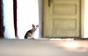 En kattunge får svårt att klara sig själv i stugan när vintern kommer.  Foto: Scanpix