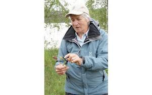 Birgitt Broström har skaffat sig sina florakunskaper genom att redan som ung skaffa en florabok och läsa - från pärm till pärm. Den står fortfarande kvar i hennes bokhylla.FOTO: KERSTIN ERIKSSON