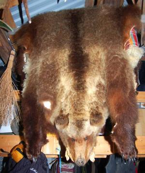 En av de många björnar som fällts av Lars Svanberg.