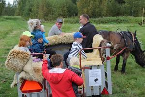 Stora som små åkte häst och vagn i skogen.