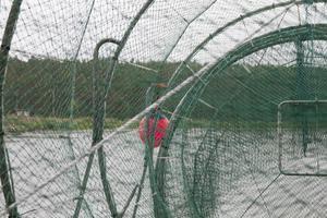 Välanvända fiskeburar pryder strandkanten.