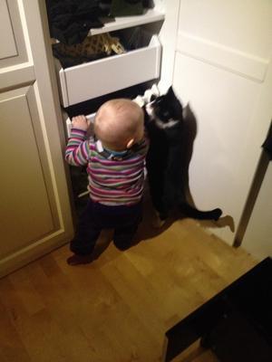 Nelly 11 månader slår ihop sig med katten Zigge för att kollar in om garderoben innehåller något intressant.