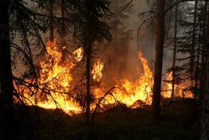 Skogsbränderna kostade markägaren Bergvik Skog fem miljoner i släckningskostnader. Foto: Arkiv.