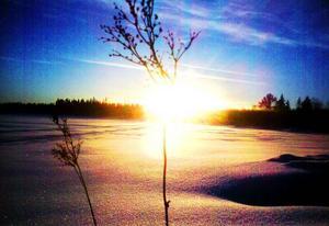 Den lågt stående januarisolen färgar Svartsjöarna.