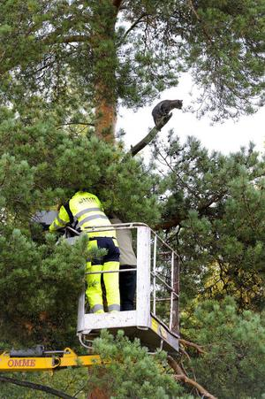 Johan Wetter tillsammans med Djurlivs reporter Pia Persson på väg upp till katten i räddningsaktionen som tyvärr måste avbrytas.