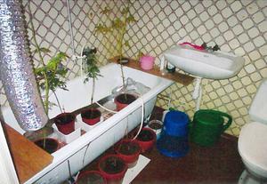 En 59-årig man odlade marijuana i sitt hem. Så här såg utrustningen i mannens badrum ut.