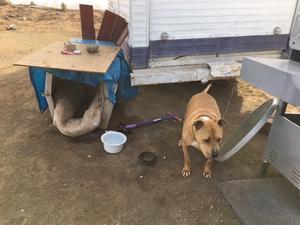 Hunden Delgado är en av de hundar som Anna Skaff tagit hand om genom sin organisation.