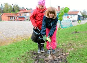 Första bevattningen. Ebba Carlsson och Lovisa Johansson med vattenkannan. Sedan ska eleverna och föräldrarna sköta plantorna året runt.