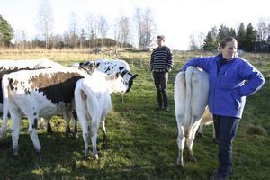 Lilla Grödby i Trollsta i Sorunda är en ekologisk satsning. Där finns kött, honung och ekologiskt odlat att köpa.