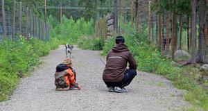 Här ser Wilda och John Eliasson på när Kvannildalens Tapio ska träffa en älg för första gången.
