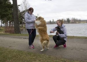 Collien Winna pussar matte Anita Samsson. Intill sitter Ellen Arvidsson med Zeb, som är en prazsky krysarik.
