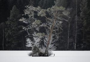 En frostig morgon vid målsjön, Norberg