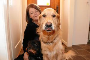 Trösthundar. Paret Blomsters hundar Stig och Sigge är alltid med på jobbet.