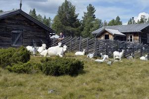 Fäboden Valdalsbygget där Bernie Holm och hans hustru Monica driver fäbodbruk.