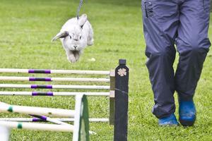 Kaninen Visa är en hejare på att hoppa. Melina och Jennie Svensk stod bakom uppvisningen.