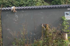 Två år i rad har kaninpesten härjat i Malmö så döda kaniner låg slängda lit varstans.