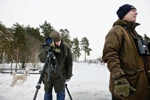 Örnmål. Willy Elvin har siktet inställt på en ätande havsörn medan Per Åkesson står och väntar på ormvråken. Hunden Nisse kikar, förmodligen, efter något helt annat.