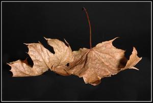 Höstens blad.