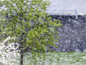 Det snöade i bland annat Västerås och Stockholm (där bilden är tagen) på tisdagen.