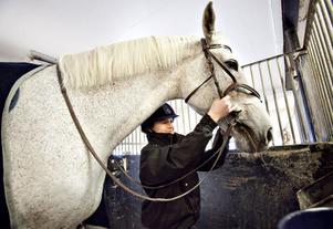 Malla Lundberg, 13 år, tävlar i helgen som yngsta deltagare i Gävle Ryttarsällskaps elitlagstrupp. Hon rider stallets största häst, Callaway. Samtidigt är Malla väldigt sjuk. I hela sitt liv har hon kämpat mot tumörsjukdomen neurofibromatos.