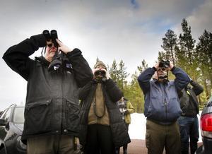 Hudiksvalls Fågelklubb i full fart med att spana efter talltitor.