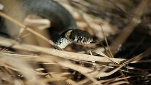 En liten snok som kom ringlade i gräset mitt framför fötterna.