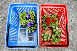 Utseendet är viktigt. I alla fall när det gäller blommor till trädgården.