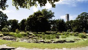 Grönt är skönt. Vi jobbar på för att Västerås ska bli en grönare kommun, där betong- och asfaltstaden har lungor av parker, dungar, gräsmattor och planteringar, skriver debattörerna.foto: alf pergeman