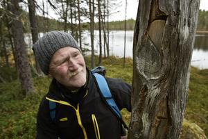 Arkeologen Bernt Ove Viklund inspekterar en ovanligt välgjord ristning i ett dött träd.   – Det här sätter Björna socken på kartan när det gäller kulturspår i träd, säger han.