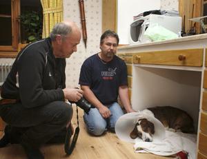 Göran Jansson från länsstyrelsen dokumenterade dreverns skador. Ägaren Göran Nilsson är tagen men glad att hunden är tillbaka efter operationen.