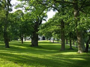 Normalt tar man väl en bild på slottet och låter träden i parken inrama motivet. Här jag jag låtit de vackra gamla träden i slottsparken vara huvudmotivet med delar av slottet som bakgrund.