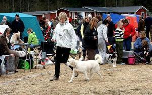 Camilla Lundgren, Älandsbro med golden retrievertiken Ebba som hade mycket spring i benen.
