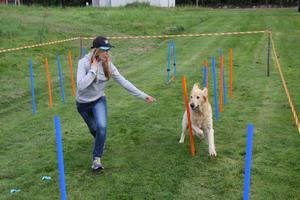 Tove Myhr och Ville visade agility.