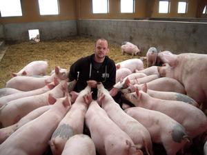 Erik Svenssons grisar verkar nästan tama och de visar ett obekymrat beteende.